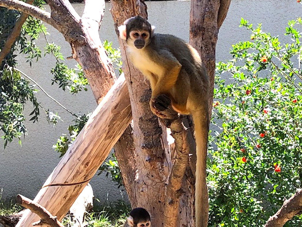 Mono en Sigean