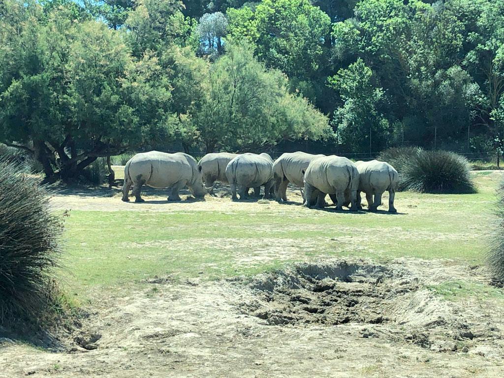 rinocerontes sigean